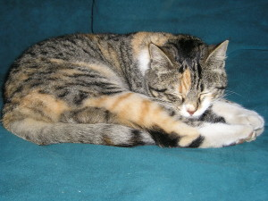 Taking theanine and gaba for sleep is beneficial for everyone, even your cat!